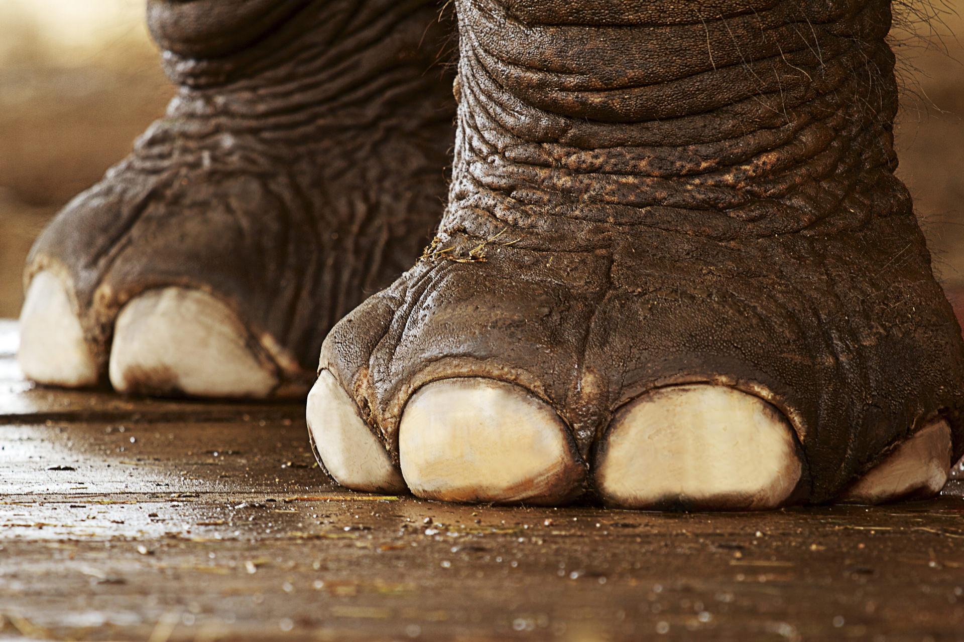 elefant_mini